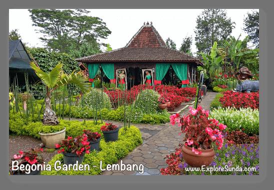 Parks and gardens in the land of Sunda: Begonia Garden, Lembang - Bandung.