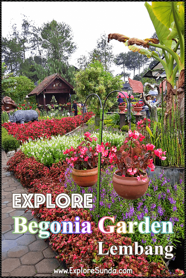 Things to do in Bandung: Explore the Begonia Garden in Maribaya Lembang |#ExploreSunda #KebunBegonia #BegoniaGarden