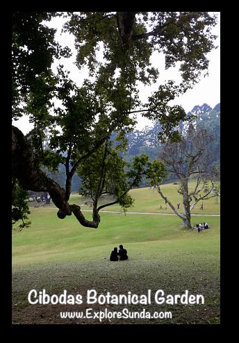 Cibodas Botanical Garden, Puncak