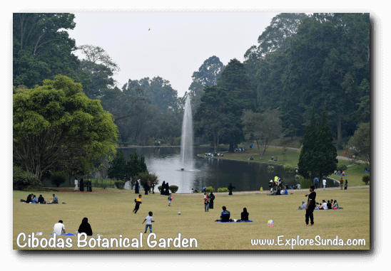 Big pond, the center of activity in Cibodas Botanical Garden, Puncak