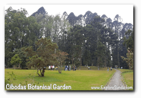 Big pond with equally huge lawn, the center of activity in Cibodas Botanical Garden, Puncak