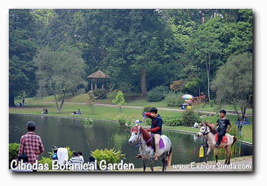 Horse riding near the big pond, at Cibodas Botanical Garden, Puncak