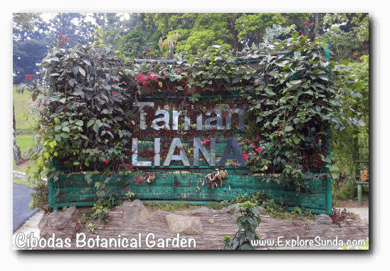 Liana Garden in Cibodas Botanical Garden, Puncak