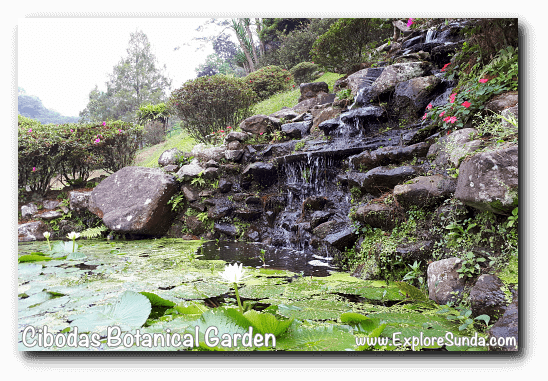 Water lily pond in Rhododendron garden, Cibodas Botanical Garden, Puncak