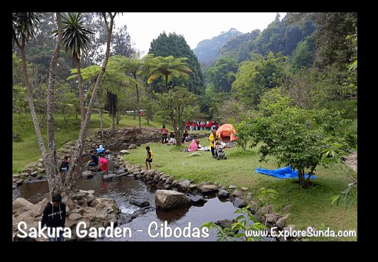 A picnic at Sakura Garden - Cibodas Botanical Garden
