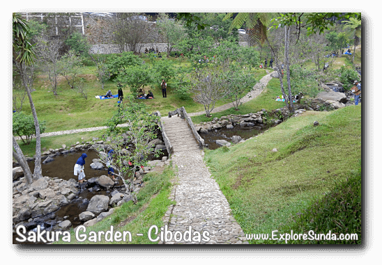 Do you cross the bridge or waddle through the creek? At Sakura Garden - Cibodas Botanical Garden