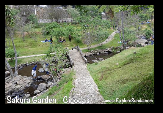 Do you cross the bridge or waddle through the creek? At Sakura Garden - Cibodas Botanical Garden