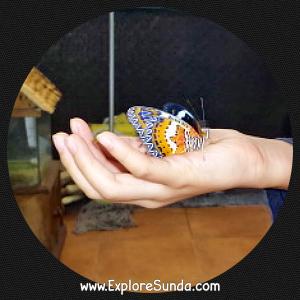 Petting a 'new born' butterfly at Cihanjuang Butterfly Garden, Lembang - Bandung.