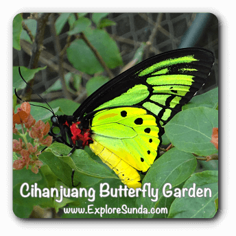 Cihanjuang Butterfly Garden, Bandung