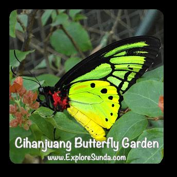 Cihanjuang Butterfly Garden, Lembang