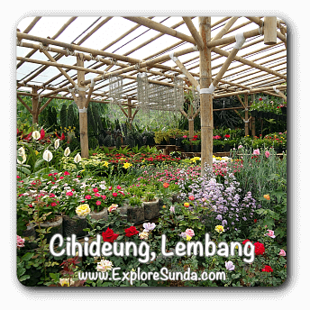 Cihideung, Lembang, the whole village is full of nurseries, flowers and plants perfect for our gardens