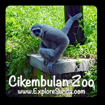 Cikembulan zoo, Garut, West Java