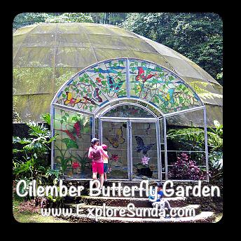 Cilember Butterfly Garden in Puncak Pass.