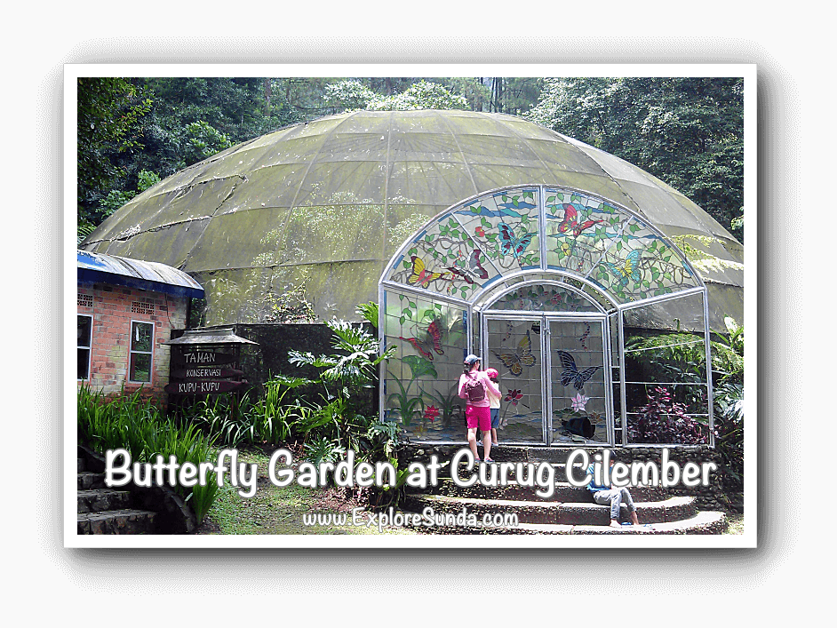 Butterfly Garden at Curug Cilember, Puncak