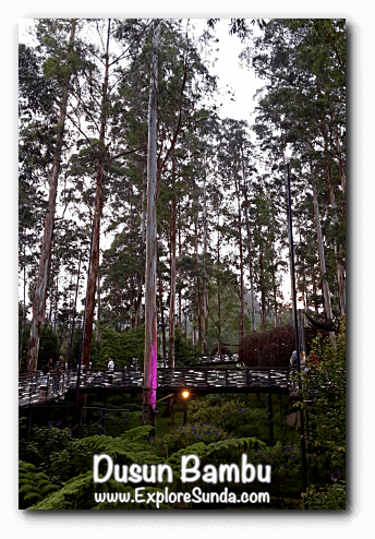 Lutung Kasarung, the magical view during dusk, at Dusun Bambu,  Cisarua - Lembang