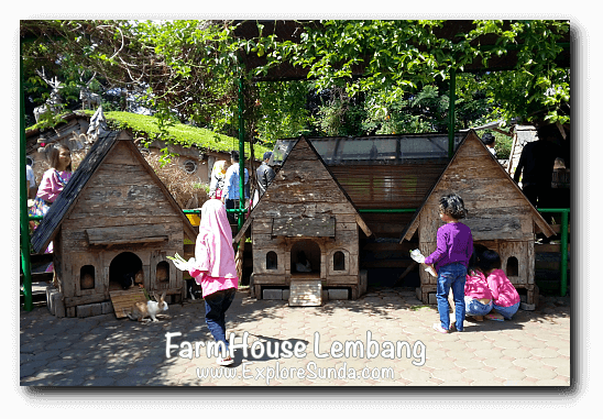 Feeding rabbit in FarmHouse Lembang