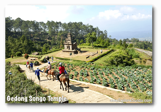A horse ride to visit all of the temples in Candi Gedong Songo complex.