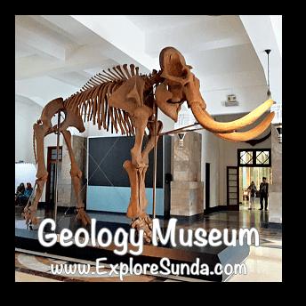 Blora Elephant in Geology Museum, Bandung