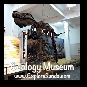 A replica of T-rex in Geology Museum, Bandung