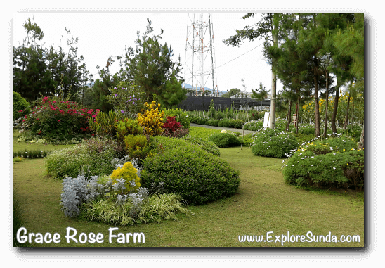 Gardens inside Grace Rose Farm in Cisarua, Lembang
