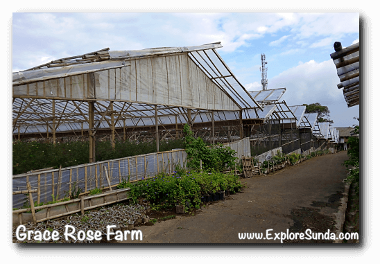 Greenhouses at Grace Rose Farm in Cisarua, Lembang