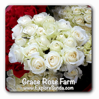 Grace Rose Farm