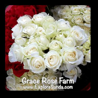 Grace Rose Farm