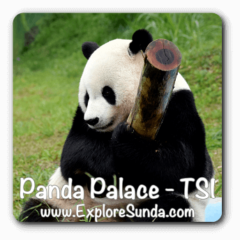 Cai Tao plays in Panda Palace, Taman Safari Indonesia  Cisarua, Puncak