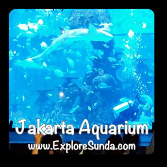 Jakarta Aquarium in Neo Soho Mall, West Jakarta