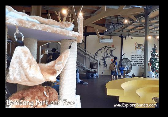 Cat Cafe at Lembang Park and Zoo
