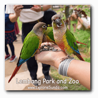 Birds Eating Sunflower Seeds at Lembang Park and Zoo