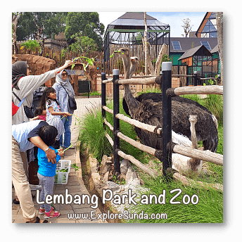 Parks and Gardens: Feeding a family of ostrich at Lembang Park and Zoo, Bandung.