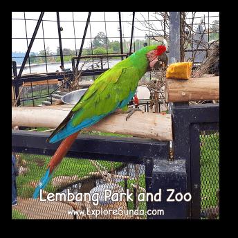 Inside The Large Aviary at Lembang Park and Zoo