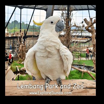 A Cockatoo at Lembang Park and Zoo