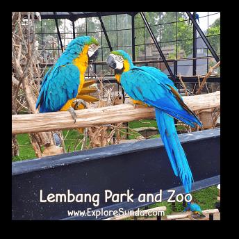 A Couple of Macaw at Lembang Park and Zoo