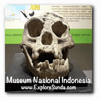 The skull of Homo Floresiensis, a collection of Museum Gajah (The National Museum of Indonesia), Jakarta