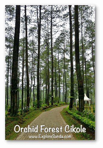 Parks and gardens in the land of Sunda: Orchid Forest Cikole - Lembang, Bandung.