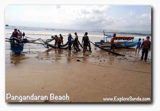 A view in Pangandaran: fishermen ready to spread the nets to the sea then pull it back to the shore hoping to catch a lot of fish.
