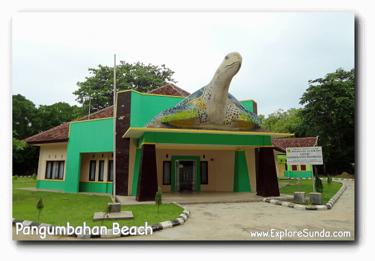 The office of the Green Turtle Conservatory in Pangumbahan beach, Ujung Genteng.