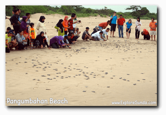 Every dusk visitors help to release the turtle hatchlings to the ocean.