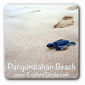 The green turtle conservatory at Pangumbahan Beach