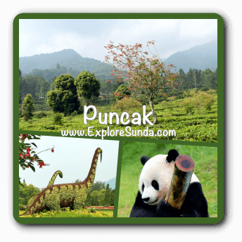 Attractions in Puncak Pass