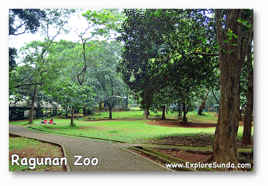 Vast lawns in Ragunan Zoo Jakarta, perfect for families picnic.
