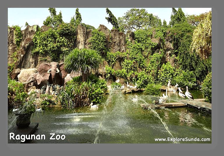 Pelican pond near the main gate of Ragunan Zoo.