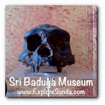 A replica of Pawon man skull, displayed in Sri Baduga Museum, Bandung.