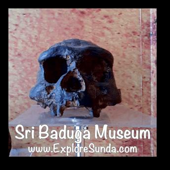 A replica of Pawon man skull, displayed in Sri Baduga Museum, Bandung.
