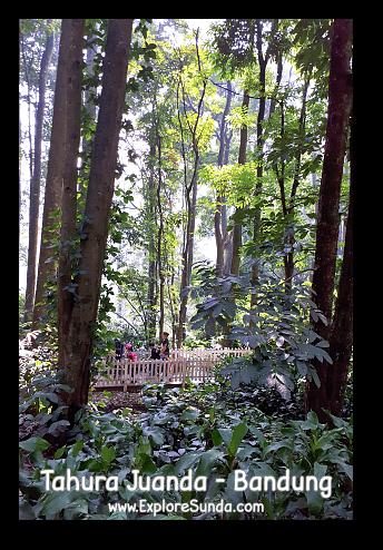Taman Hutan Raya Ir. H. Djoeanda | TahuraJuanda - DagoPakar, Bandung.