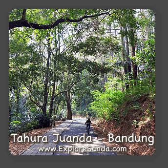 Tahura Juanda, the city forest in Bandung.