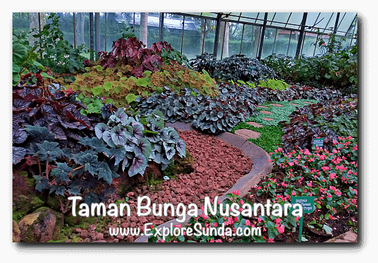 Begonia garden inside the green house at Taman Bunga Nusantara in Cipanas, Puncak