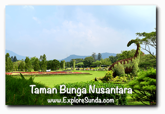 A Dinosaur Topiary overlooks the garden at Taman Bunga Nusantara in Cipanas, Puncak